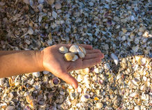 Seashells on the coast bottomed Stock Images