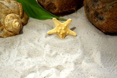 Seashells, coconuts and a starfish on beach sand. Summer holiday concept Royalty Free Stock Photos