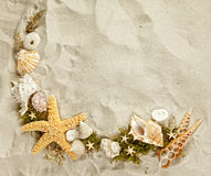 Seashells collection Stock Image