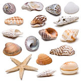 Seashells collection. A collection of seashells isolated on a white background Stock Photography
