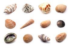 Seashells collection. Close up of different seashells isolated over white Stock Photos