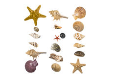 Seashells  collection Royalty Free Stock Image