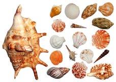 Seashells collection. Collection of beautiful isolated on white seashells stock photo