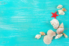 Seashells collection Stock Image
