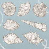 Seashells collection. Royalty Free Stock Image