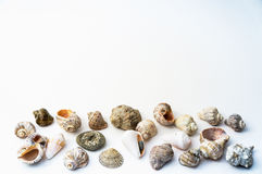 Seashells collection on the white. Background royalty free stock photography