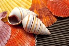 Seashells colorés. photo libre de droits
