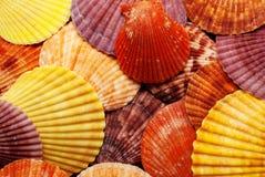 Seashells colorés. image stock
