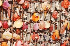 Seashells colorés image stock