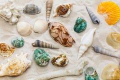 Seashells colorés Image libre de droits
