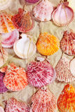 Seashells colorés sur le sable photographie stock libre de droits