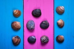 Seashells on a colored background, frames and gentle background of two colors for writing text, Royalty Free Stock Photography
