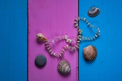 Seashells on a colored background, frames and a glamorous   background of two colors for space for text, Royalty Free Stock Photography