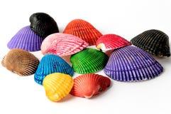Seashells. Colored seashells on white background Stock Photo