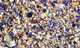 Seashells coloridos foto de archivo libre de regalías