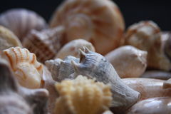 Seashells coloridos Foto de Stock Royalty Free