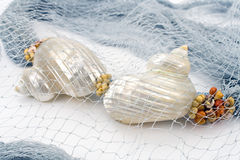 Seashells on colourful female scarf Stock Photo