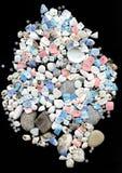 Seashells com os grânulos no fundo preto Fotos de Stock Royalty Free