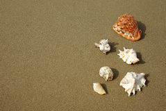 Seashells composition on the beach Stock Image