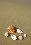 Seashells composition on the beach Royalty Free Stock Image