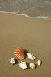Seashells composition on the beach Stock Photography
