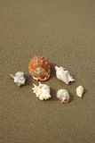 Seashells composition on the beach Royalty Free Stock Photo