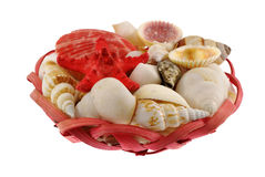 Seashells composition in red crib Stock Photography