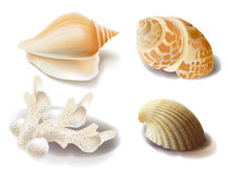 Seashells and coral Stock Photos