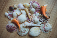 Seashells and Coral as background Royalty Free Stock Image