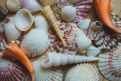 Seashells and Coral as background Stock Image