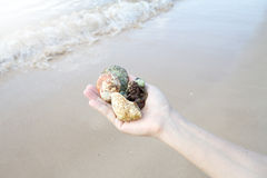 Seashells and coral on right hand, gift from the ocean Stock Photography