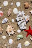 Seashells, coral and starfish Stock Images