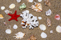 Seashells, coral and starfish Stock Photos