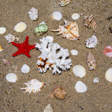 Seashells, coral and starfish Royalty Free Stock Photography