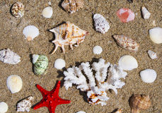 Seashells, coral and starfish Royalty Free Stock Image