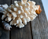 Seashells and coral on the wooden table Stock Image