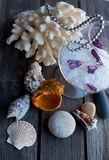 Seashells and coral on the wooden table Stock Images