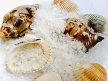Seashells and crystals salt Royalty Free Stock Photo