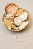 Seashells dans le panier photographie stock