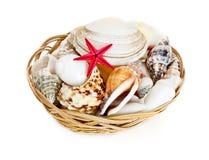 Seashells dans le panier image stock