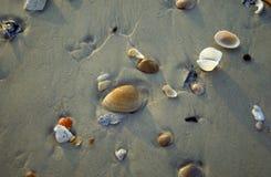 Seashells dans le sable photographie stock