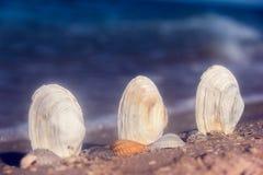 Seashells dans le sable images stock