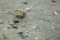Seashells dans le sable photos stock