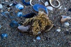 Seashells dans le sable images libres de droits