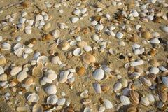 Seashells dans le soleil de configuration Photos stock
