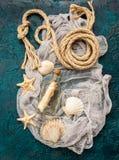 Seashells on dark turquoise background Stock Photography