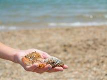Seashells de fixation de la main d'une fille images libres de droits