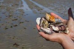 Seashells de fixation de main photographie stock