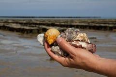 Seashells de fixation de main images libres de droits
