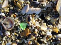 seashells de plage photo libre de droits